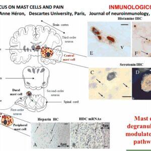Histamine as a pain modulator